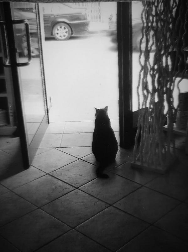 Gatto Lillo
