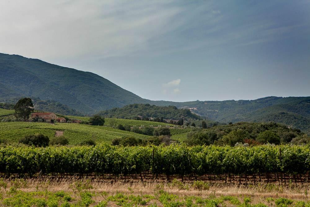 Montecalvi